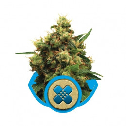 Painkiller XL-Medical
