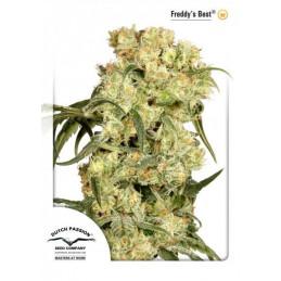 Freddy's Best  ®  - Dutch Passion - feminizovaná semínka konopí