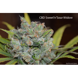 CBD Sweet and Sour Widow - CBD GREW - regular