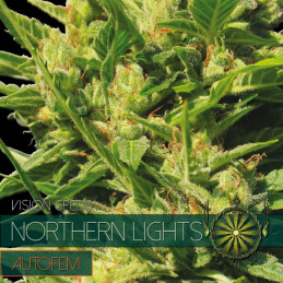 Northern Lights Autofem - Vision Seeds - autoflowering