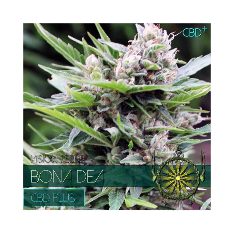 Bona Dea Cbd+ - Vision Seeds - léčebná semena marihuany