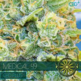 Medical 49 CBD+ - Vision Seeds - léčebná semena