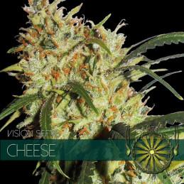 Cheese - Vision Seeds - feminizovaná semena