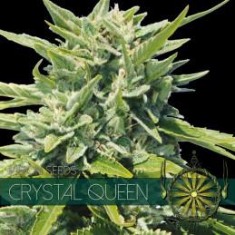 Crystal Queen - Vision Seeds - feminizovaná semena
