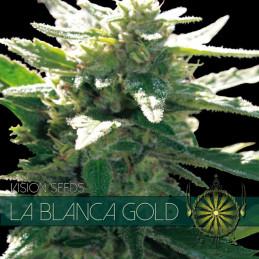 La Blanca Gold - Vision Seeds - feminizovaná semena