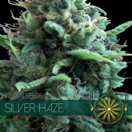 Silver Haze - Vision Seeds - feminizovaná semena