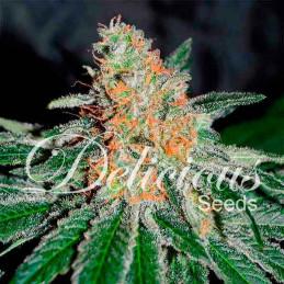 CBD Jam - Delicious Seeds - léčebná semena