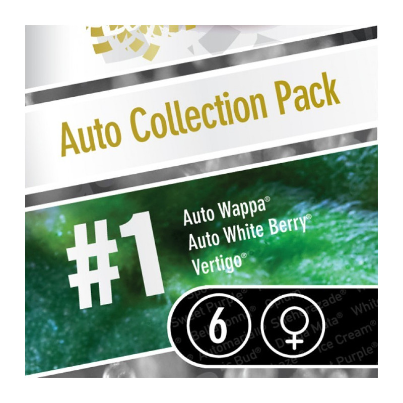 Auto Collection pack 1 - Paradise Seeds - mix autofloweringu