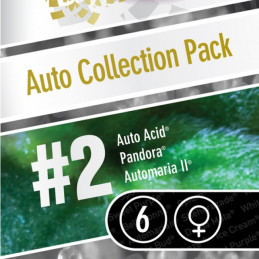 Auto Collection pack 2 - Paradise Seeds - mix autofloweringu