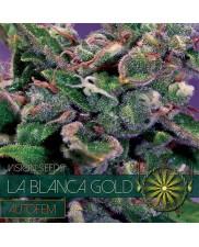 LA BLANCA GOLD AUTOFEM - VISION SEEDS - autoflowering