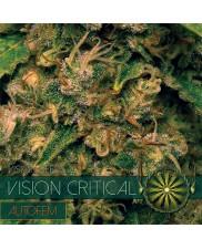 Vision Critical AutoFem - Vision Seeds - autoflowering - 3 ks