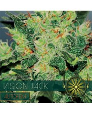 Vision Jack  AutoFem - Vision Seeds - autoflowering