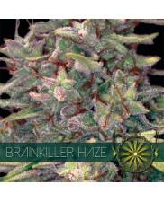 Brainkiller Haze - Vision Seeds - feminizovaná semena