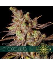 Choco Bud - Vision Seeds - feminizovaná semena