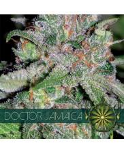 Doctor Jamaica - Vision Seeds - feminizovaná semena
