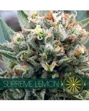 Supreme Lemon - Vision Seeds - feminizovaná semena