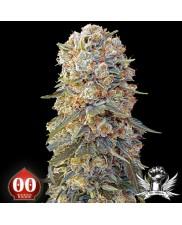 Sweet Critical - 00seeds - feminizovaná semena - 5 ks