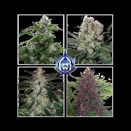 Assorted  Auto Mix - Buddha Seeds - autoflowering