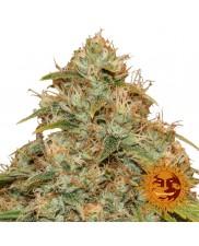CBD Lemon Potion Auto™ - Barney´s Farm - autoflowering - Léčebná semena