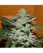 Unknown Kush ® - Delicious Seeds - feminizovaná semena - indica