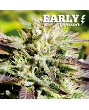Caramelo Early Version ®  - Delicious seeds - Feminizovaná Fast Version semena
