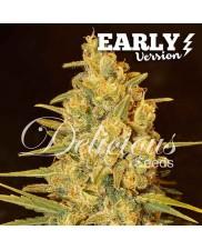 Critical Sensi Star Early Version ® - Delicious seeds - feminizovaná Fast Version semena