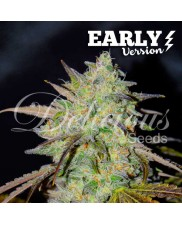 Marmalate Early Version ® - Delicious seeds - feminizovaná Fast Version semena