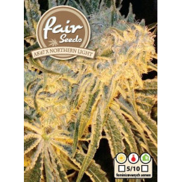 AK47 x Northern Light  - Fair Seeds - feminizovaná semena