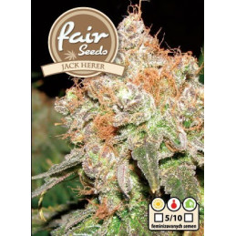 Jack Herer - Fair Seeds -...