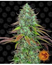 LSD Auto ™ - Barney´s Farm - autoflowering