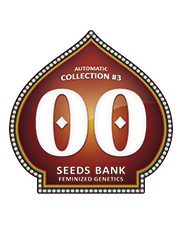Automatic Collection 3 - OOseeds - autoflowering - 6 ks