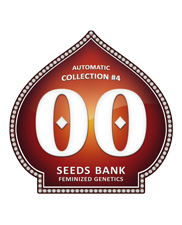 Automatic Collection 4 - OOseeds - autoflowering - 6 ks