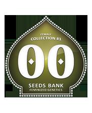 Female Collection 1 - OOseeds - autoflowering - 6 ks
