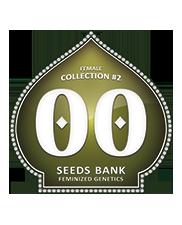 Female Collection 2 - OOseeds - feminizovaná semena - 6 ks