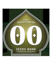 Female Collection 3 - OOseeds - feminizovaná semena - 6 ks