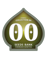 Female Collection 4 - OOseeds - feminizovaná semena - 6 ks