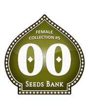 Female Collection 5 - OOseeds - feminizovaná semena - 6 ks