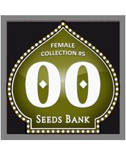 Female Collection 5 - OOseeds - feminizovaná semena - 6 ks