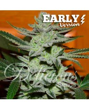 Unknown Kush Early Version - Delicious seeds - feminizovaná Fast Version semena