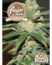 Auto Jack  - Fair Seeds - autoflowering