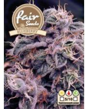 AutoBlueberry  - autoflowering - Fair Seeds - autoflowering