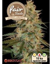 Agent Orange - Fair Seeds - Regular nefeminizovaná semena