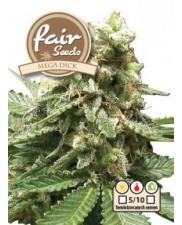 MegaDick - Fair Seeds - feminizovaná semena