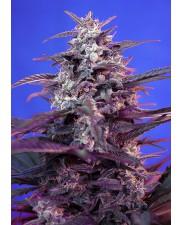Bloody Skunk Auto - Sweet Seeds - autoflowering  ( AKCE  3+1ks , 5+2ks )