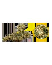 CBD Shaolin Bullet -12% CBD - sušené květy - 3g