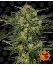 L.S.D  - Barney´s Farm - feminizovaná  semínka marihuany