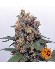 Vanilla Kush - Barney's Farm - feminizovaná semena