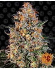 Bubba Kush™  - Barney´s Farm - feminizovaná semena
