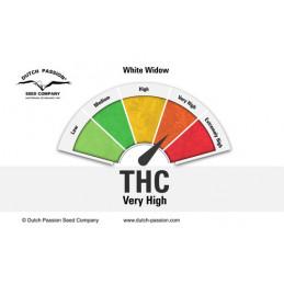 White Widow ®  - Dutch Passion - regular semena -  10 ks