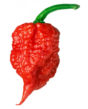 Carolina Reaper Red - HP22B - Chilli semena - 10 ks